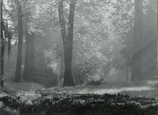 photographie paysage pictorialiste