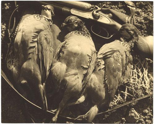 photo photographie époque tirage argentique nature morte chasse oiseaux