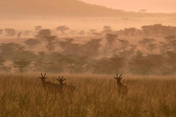 Topi Olare Motorogi Kenia Safari