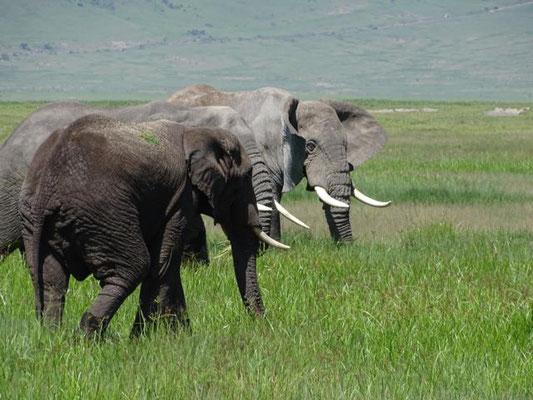 Ngorongoro Krater Tansania Safari