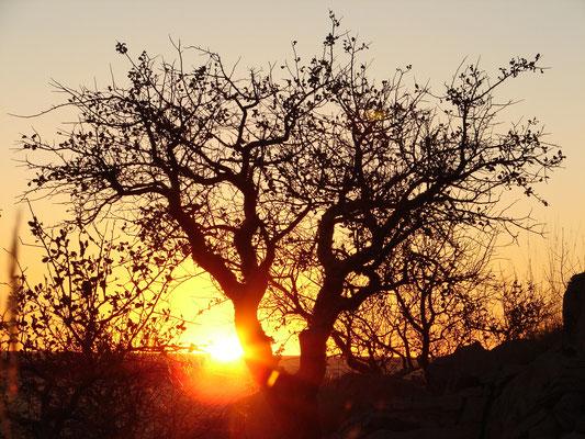 Sonnenuntergang Afrika Reise