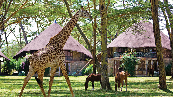 Lake Naivasha Sopa Lodge (Copyright Sopa Lodges)