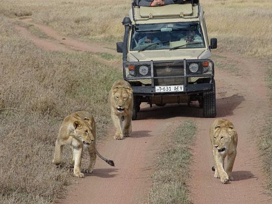 Zentrale Serengeti - Tansania Safari mit Go'n joy africa