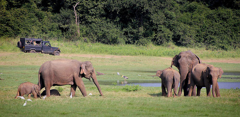 Elefanten auf einer Afrika Safari