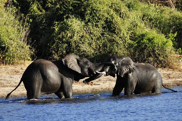 Elefanten Afrika Safari