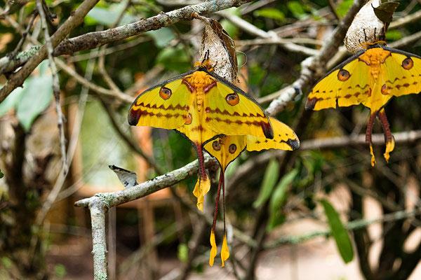 Flora auf Madagaskar