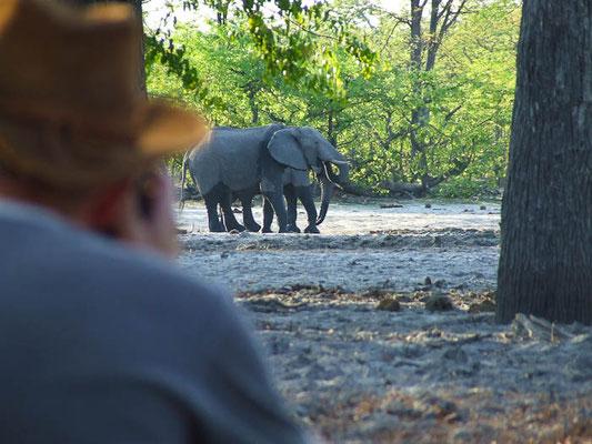 Buschwanderung Botswana Safari
