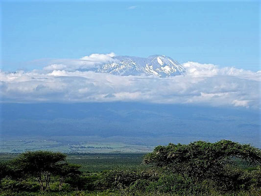 Kilimanjaro Tansania Safari