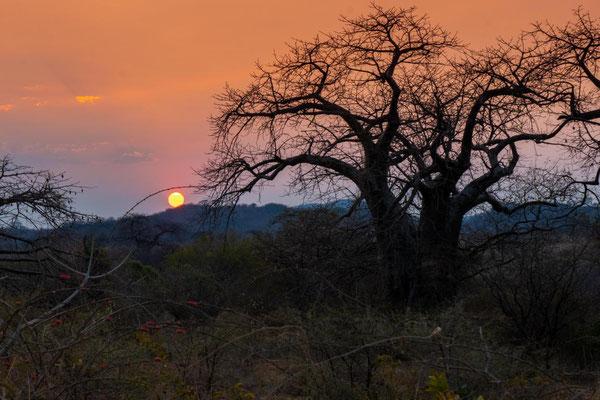 Sonnenaufgang im Mikumi Nationalpark