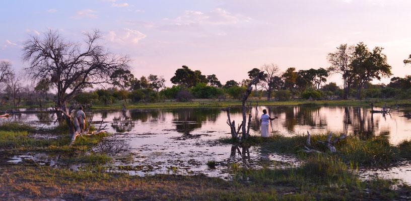 Abendstimmung in Botswana