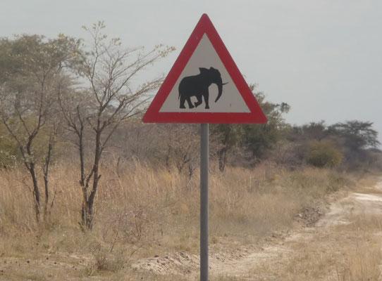 Elefant auf einer Capivi Reise