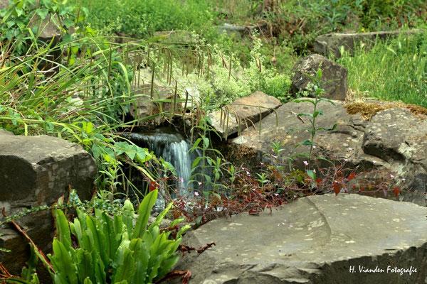 kleiner Wasserfall im Kölner Zoo