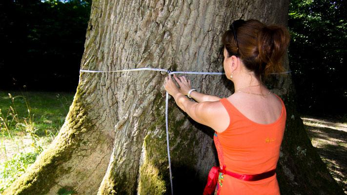 Agence forestière - mesure de circonférence arbre