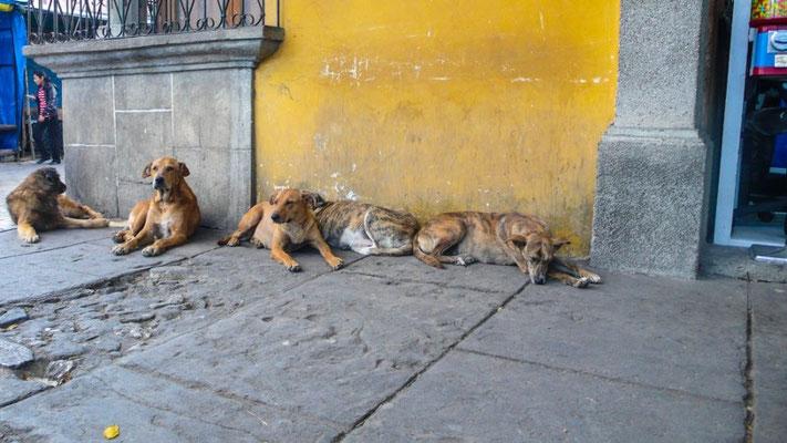 Arme Strassenhunde