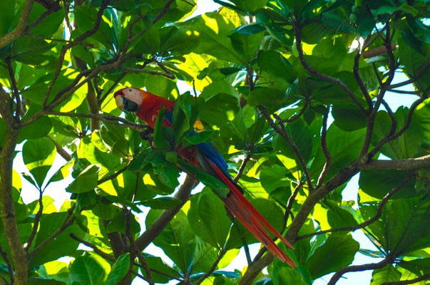 Papagei ohne Käfig, das gibt es tatsächlich!!! So schööön.