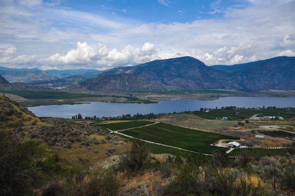 Schöne Aussicht auf das Weingebiet
