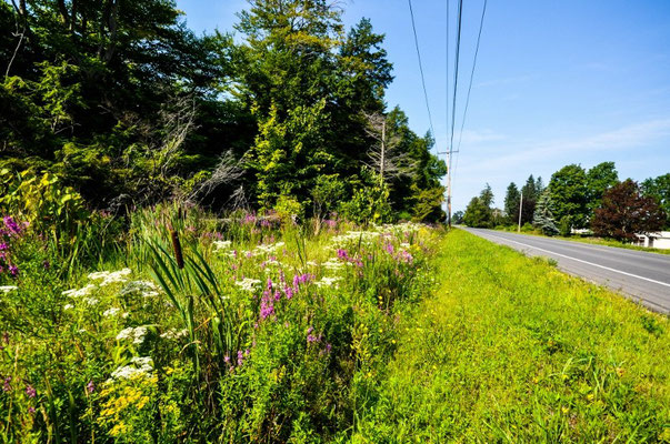 Wunderschöne, wilde Blumen am Strassenrand