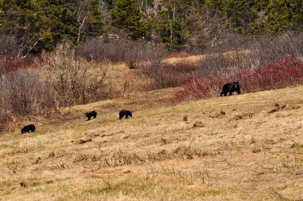 Die fotogene Bärenfamilie