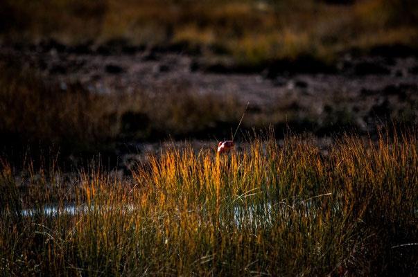 Western Brook Pond Wanderung