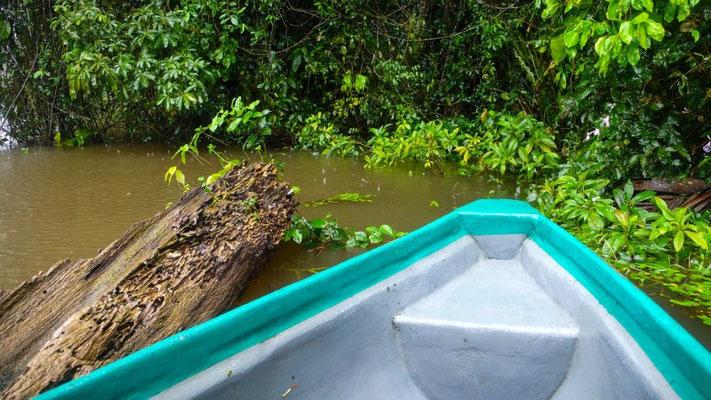 Morgendlicher Kanu-Trip