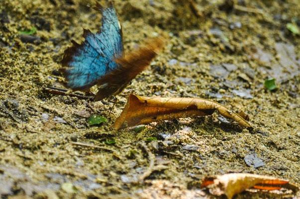Schmetterling offen