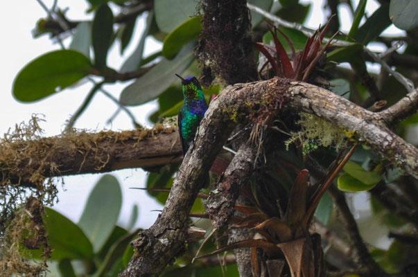 Kolibris bei der Mirador de Quetzales Lodge