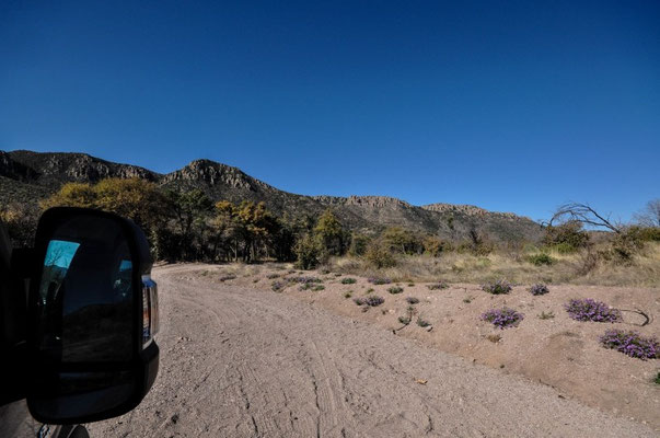 Coronado National Forest, b. Willcox