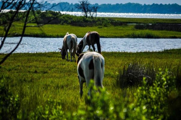 Die wilden Pferde