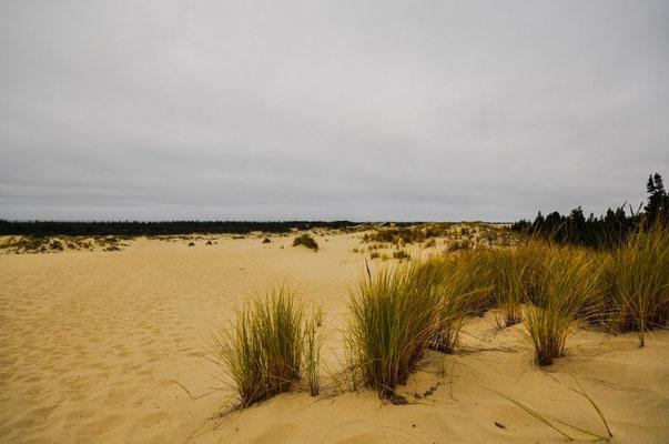 Spaziergang durch die Dünen