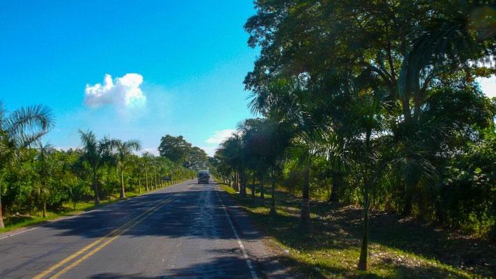 Fahrt durch die Palmenallee