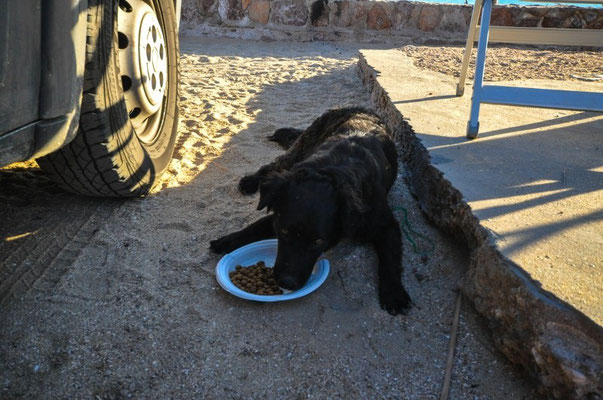 Das letzte Futter an die armen Strassenhunde México's verteilen...