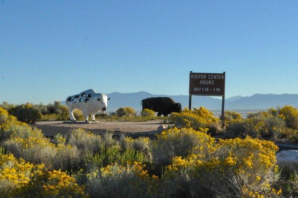 Ein echtes und ein unechtes Bison vor dem Visitor Center