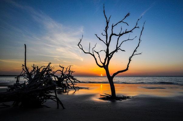 Früh morgens an der Driftwood Beach