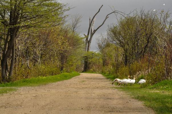 Wunderschöner Wanderweg