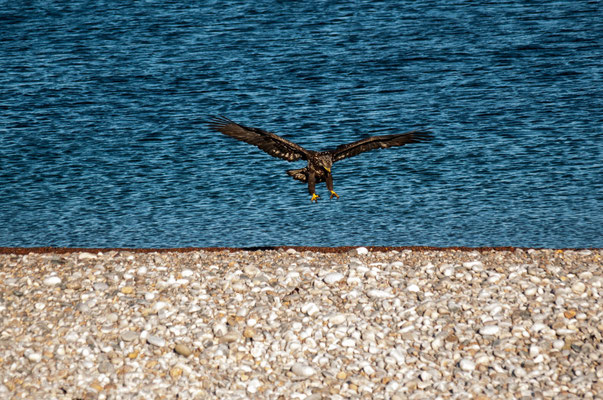 Adler in Action