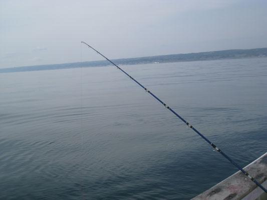 漁港近くでひねもす釣りを