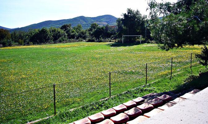 Fußballplatz oder doch Blumenwiese?