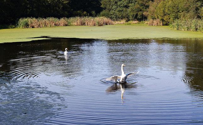 Schöner Teich in Brdo