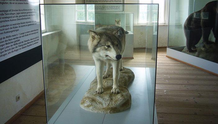 Tiermuseum