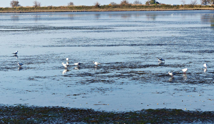 Tolle Tierwelt im Delta