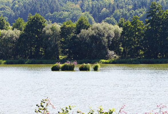 Der Fluss Regen im Sommer