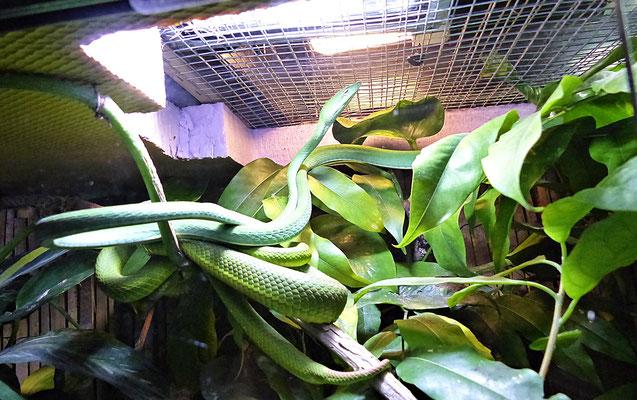 Die Schlangenwelt im Reptilienzoo
