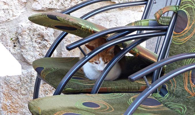 Katze in Ston