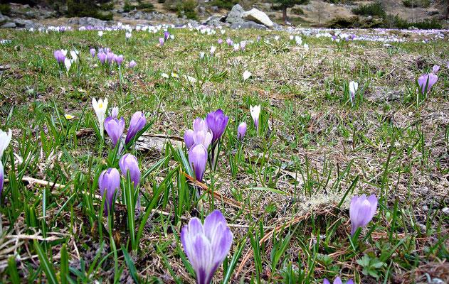 Kühtai im Frühling