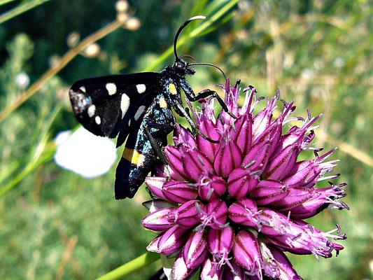 Ungewöhnlicher Schmetterling