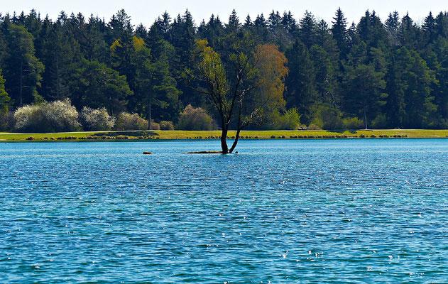 Der vordere Teil des Sees