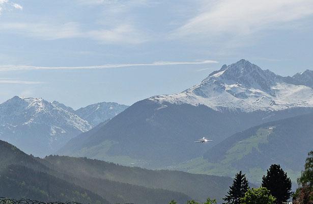 Fichtenblüte beim Flughafen Innsbruck