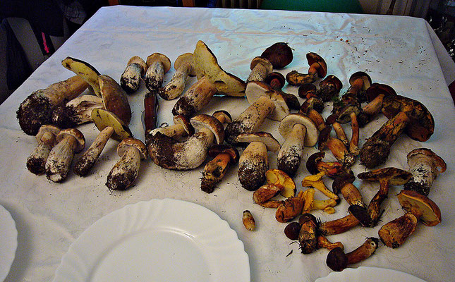 Pilzfund aus Tschechien