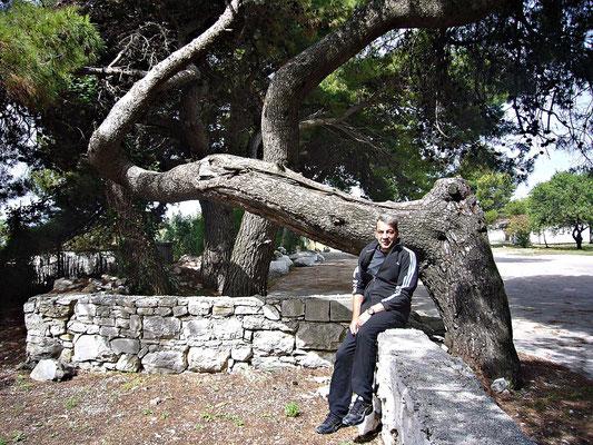Toller Baum
