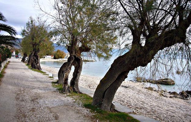 Wunderschöne alte Bäume